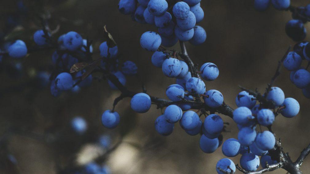 Root & Fruit
