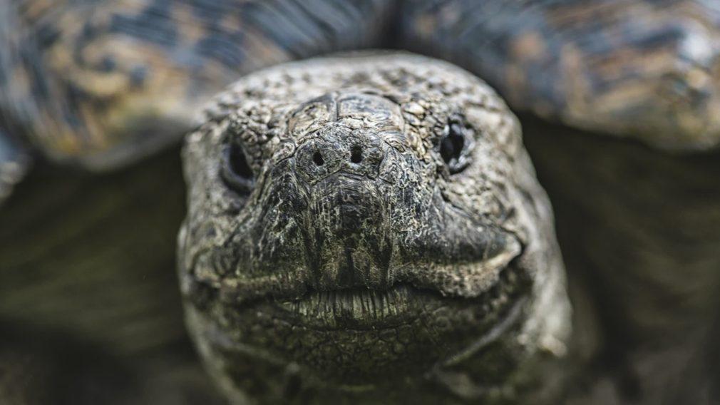 Turtles, Speed & Retribution
