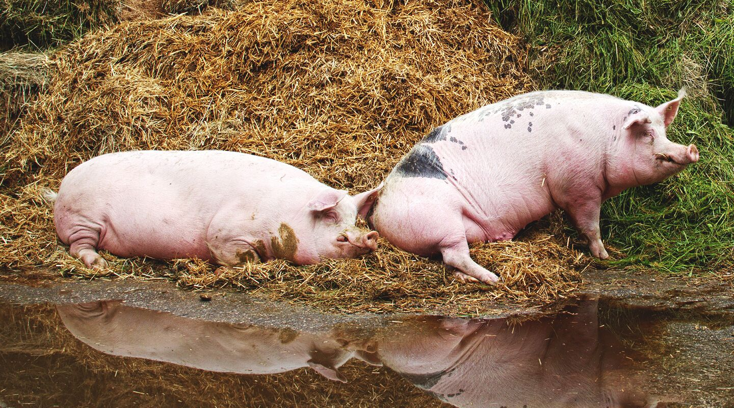 Steve's Devotional – When Prodigals Go Back to the Pigs