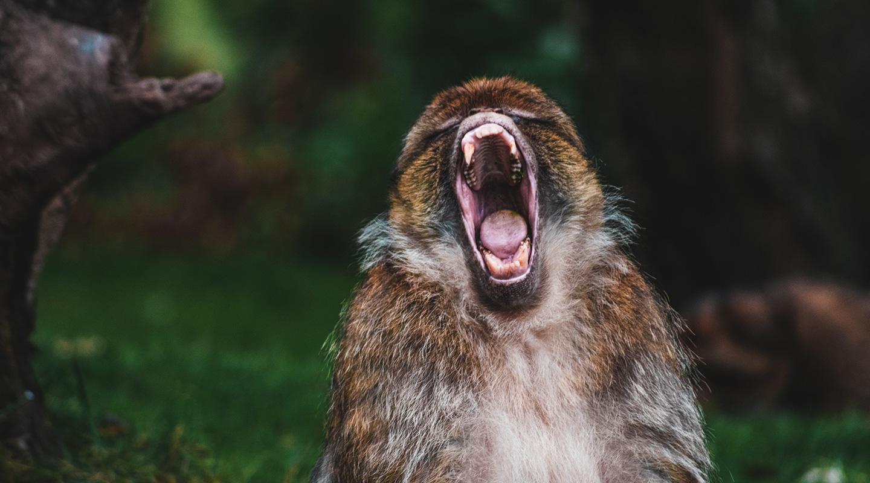 Yelling at God