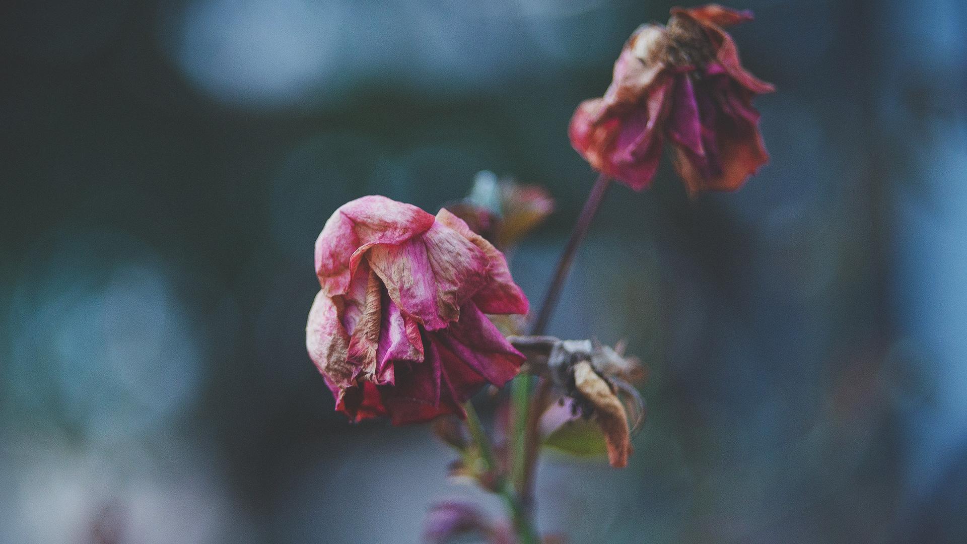 J. Todd Billings – Embracing Our Mortality | Steve Brown, Etc.