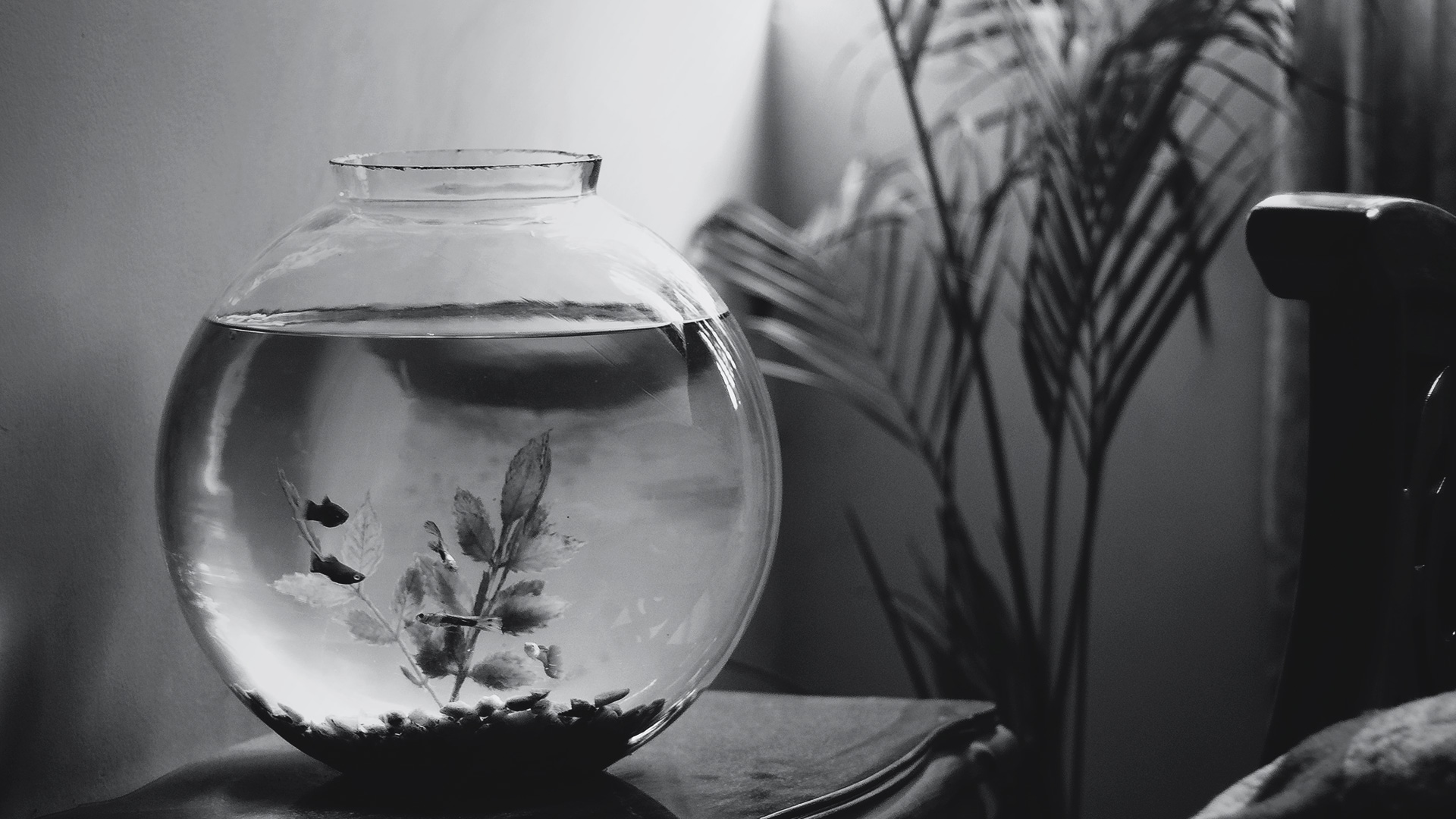 Lessons from the Fishbowl